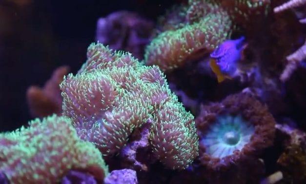 Kleurenpracht onder water
